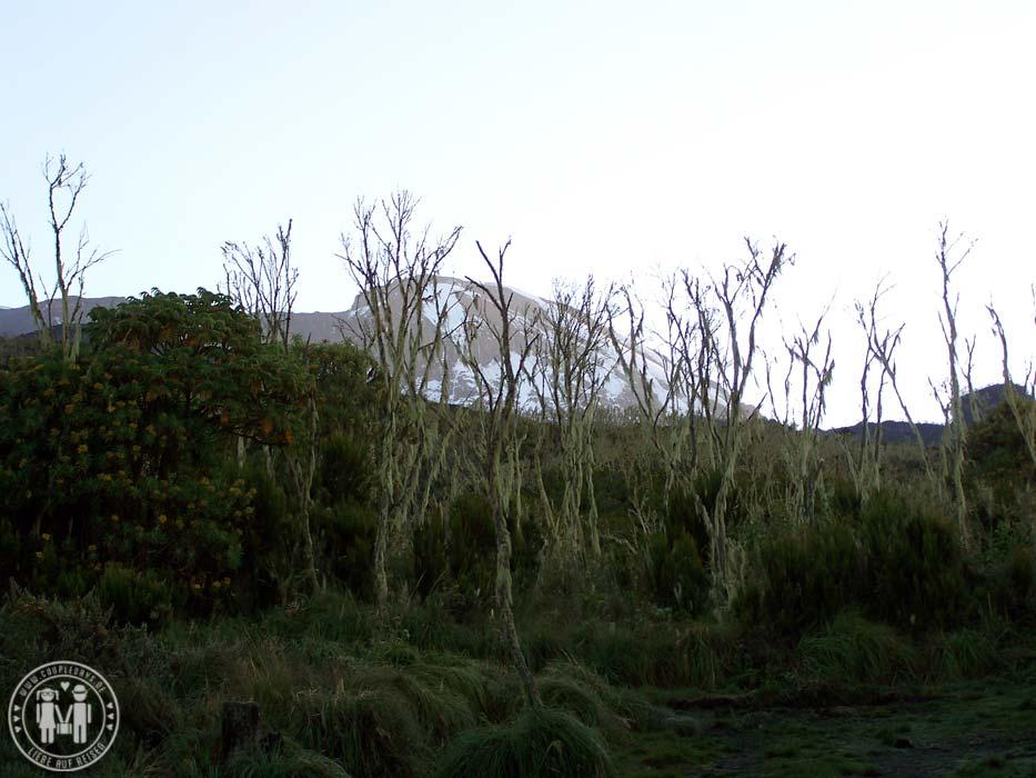 Der Gipfel des Kilimanjaromassivs von der Machame Hut aus gesehen.