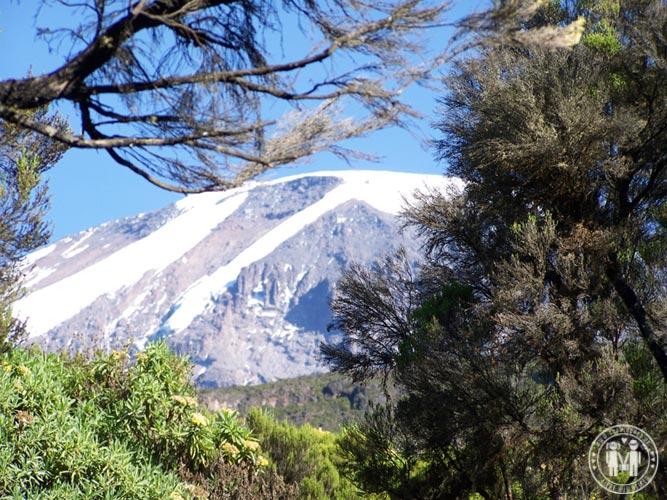 Der Kilimanjaro vom Mweka Camp aus gesehen.