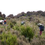 Kilimanjaro: Die Besteigung