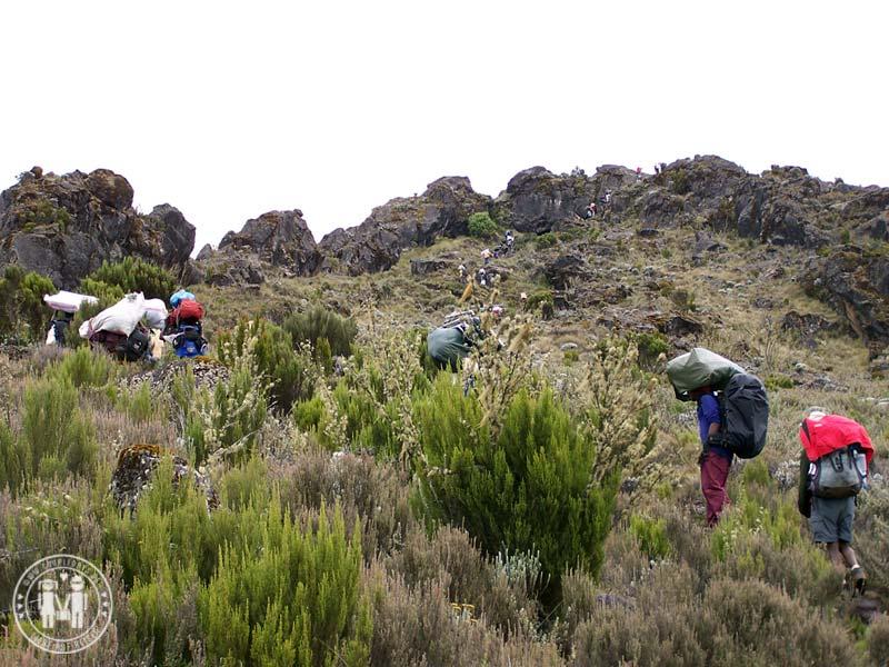 Der Weg zum Shira Camp am Kilimanjaro.