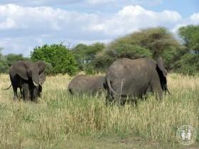 Elefantenherde im Park.