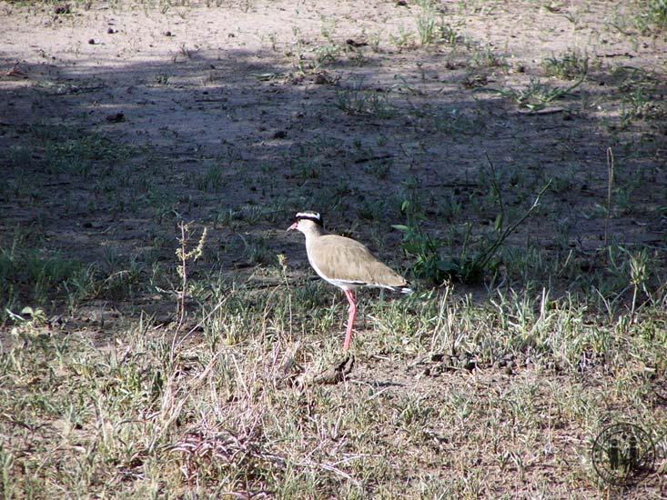 Ein Vogel im Park.