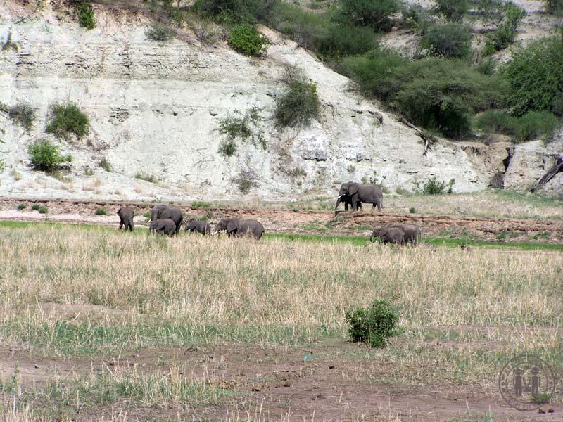 Elefantenherde in der Ebene.