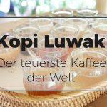 Kopi Luwak – Der teuerste Kaffee der Welt